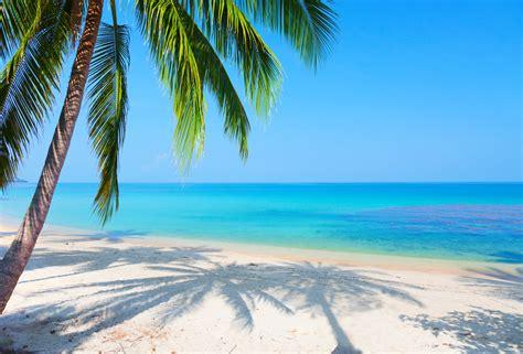 Pics Photos - Beach Hd Wallpaper Palm Tree Society Islands ...