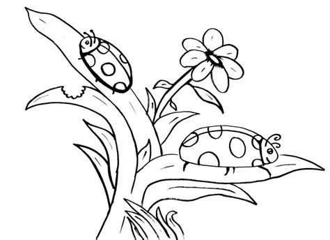Lady Bug Coloring Pages Coloring Pages