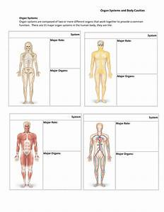 Different Body Systems and Their Functions | Fosfe.com