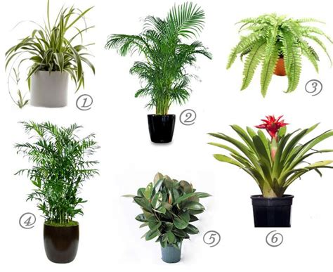 cat safe house plants  cleaner air cat safe house