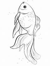 Coloring Pages Goldfish Fish Goldfishes Printable Recommended Mycoloring Colors sketch template