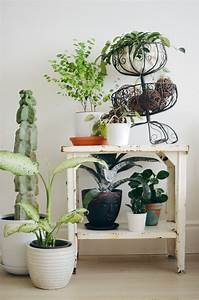 Tips, For, Keeping, Indoor, Plants, Alive