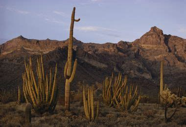 desert   National Geographic Society