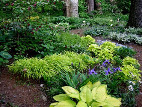 woodland garden  pinterest shade plants hosta gardens  heuchera