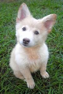 German Shepherd White And Black Mix Photo - Happy Dog Heaven