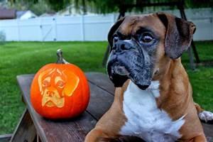 Tinkerbell Carving Pumpkin Templates