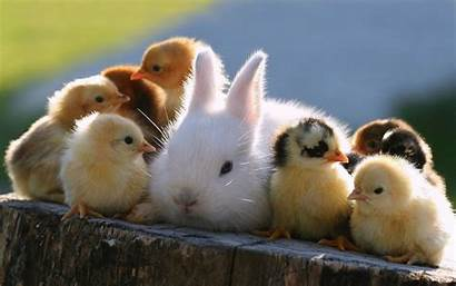 Bunnies Rabbits Animals