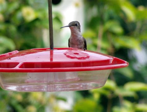 wild birds unlimited how to prevent mold from taking over