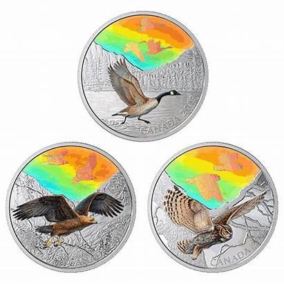 Birds Majestic Motion Canada Coin Coins Silver