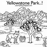 Yellowstone Hilltop Bison sketch template