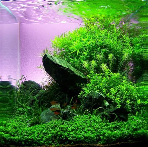 planted nano tanks images  pinterest fish