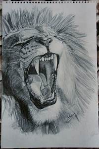 Realistic Lion Roaring Drawing