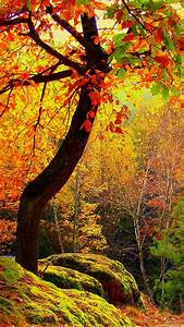 tree autumn landscape iPhone 6 wallpapers HD and 1080P 6 ...