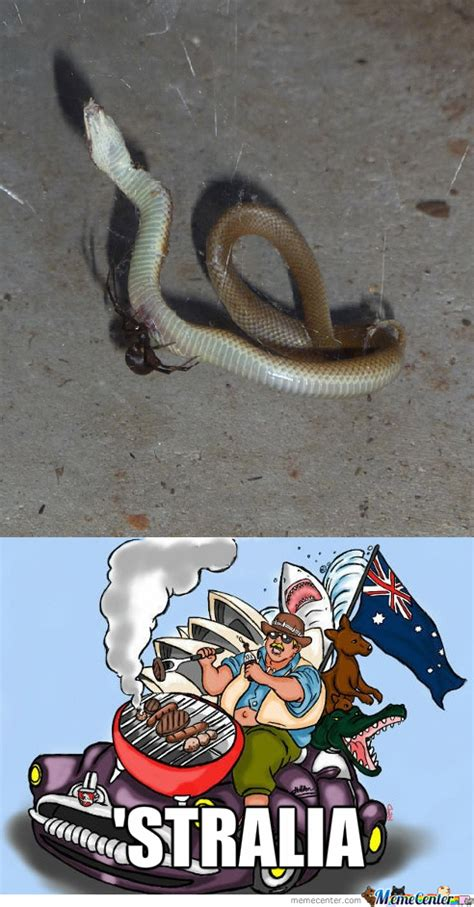 Snake Meme Snake Memes Best Collection Of Snake Pictures
