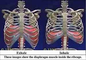 Logcontdeci  Inhalation And Exhalation Diagram