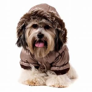 Video Pour Chien : doudoune pour chien marron manteaux chiens ~ Medecine-chirurgie-esthetiques.com Avis de Voitures