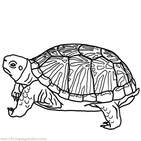 Hard Turtle Coloring Pages Printable Bestappsforkidscom
