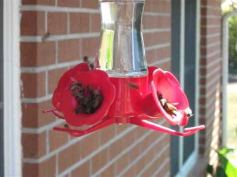 honey bees swarm hummingbird feeders youtube