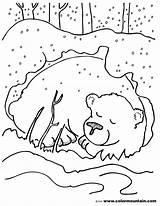 Cave Bear Drawing Coloring Lascaux Paintings Getdrawings sketch template