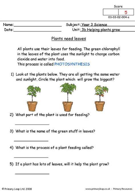 plants  leaves primaryleapcouk