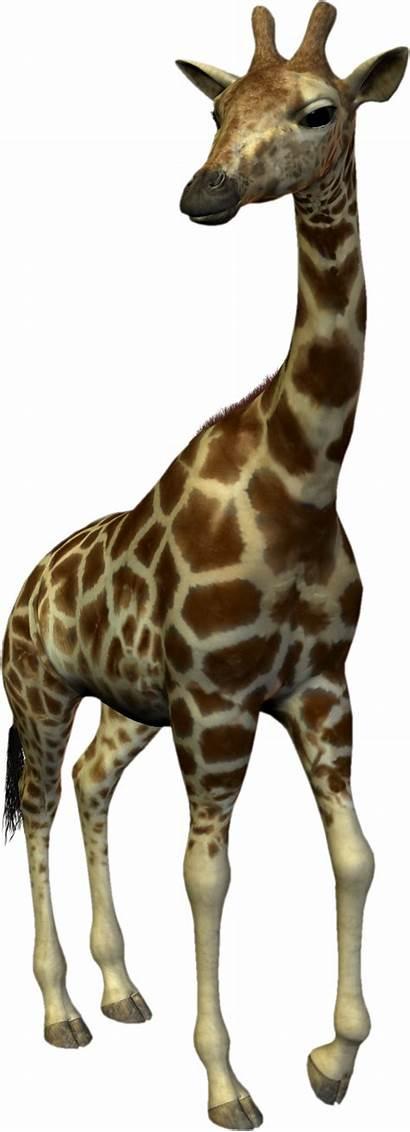 Giraffe Animal Clipart Scrapbooking Res Clip Resolution