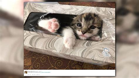 newscom missing kitten  adorably tuckered