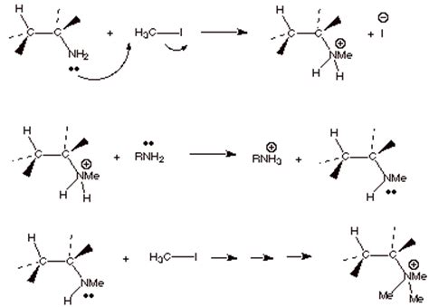 Protonated Amine by Amine Reactions Student Doctor Network