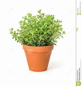 Pots à épices : origan dans un pot d 39 argile photo stock image 41150188 ~ Teatrodelosmanantiales.com Idées de Décoration