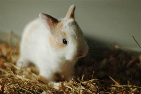 kaninchen klein hase kostenloses foto auf pixabay
