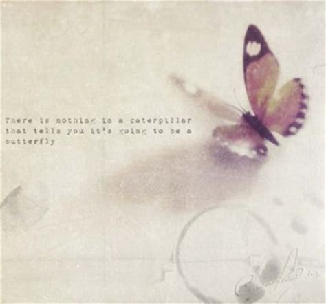 butterflies quotes quotesgram