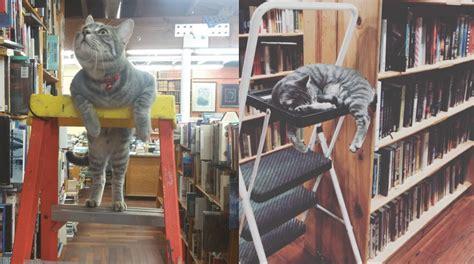 librerie torino libri usati 10 gatti da libreria in giro per il mondo circolo dei