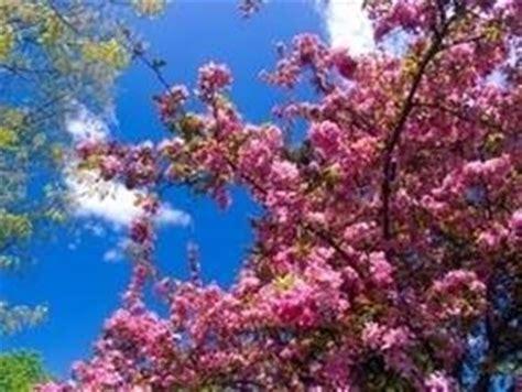alberi con fiori rosa pianta con fiori rosa fiori delle piante pianta dai