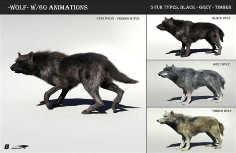 wolf  hair  fur modifier  model cgtrader