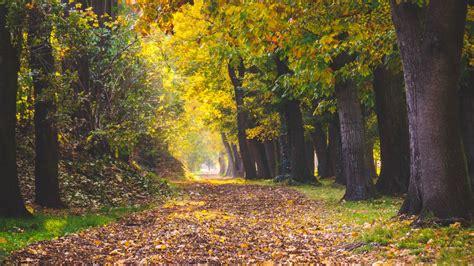 Download wallpaper 1920x1080 park, autumn, foliage, trees ...