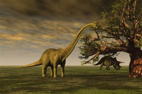 brontosaurus    comeback