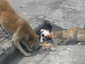how to take care of a stray cat how to take care of a stray cat dinzie