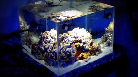nano marine aquarium setup diy nano reef aquarium