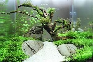 Aquarium Gestaltung Bilder : nano becken flowgrow aquascape aquarien datenbank ~ Lizthompson.info Haus und Dekorationen