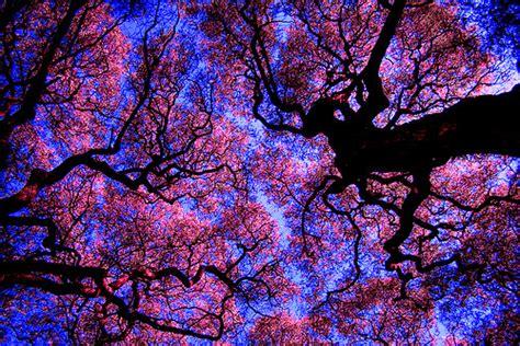 tree photography  tumblr