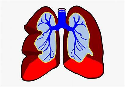 Lungs Clip Breathing Healthy Lung Arts Svg