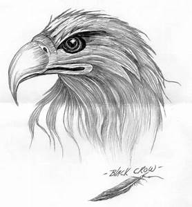 Crow Head Drawing