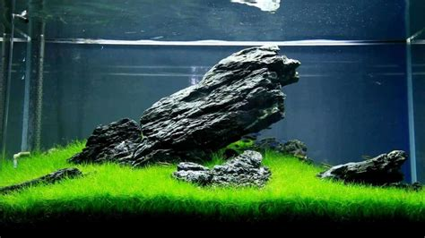 Precision Aquascapes - aquascaping guide for beginners