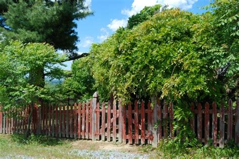 Sichtschutz Garten Rechtslage by Nachbar Pflanzen Am Eigenen Zaun Bleiben Sie Im Recht