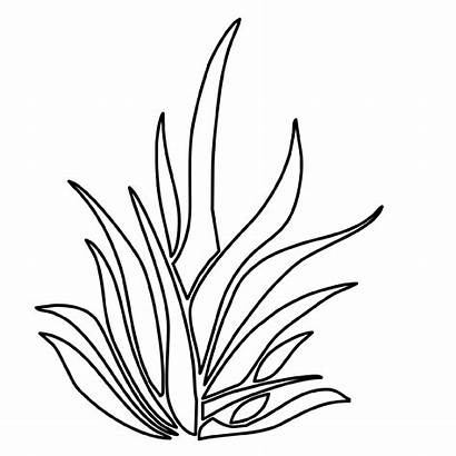 Grass Coloring Seaweed Pages Drawing Plants Outline