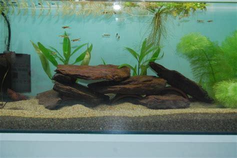 ecrevisse aquarium eau douce ecrevisse d aquarium 28 images ecrevisse d aquarium ecrevisse d aquarium ecrevisse d
