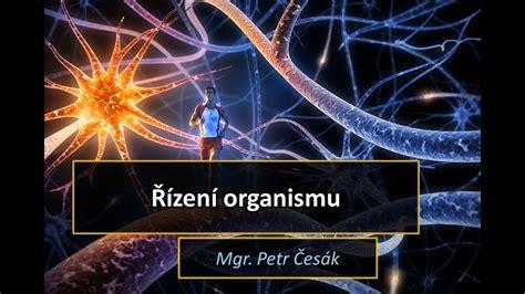 Řízení organismu - YouTube