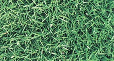 All Seasons Turf Grass