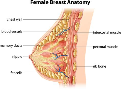 Fibrocystic Breast Defenderautoinfo