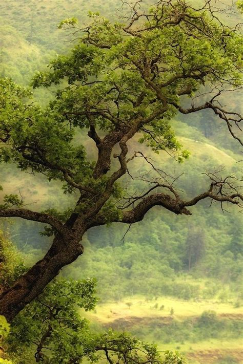 Green Tree Hd Wallpaper by Green Tree Wallpaper Beautiful Green Tree Iphone Hd