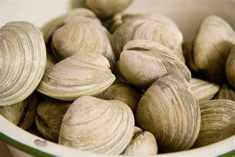 types of clams different types of fish and how to cook them